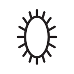 Oval brush design